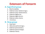 3-4 Extensors of Forearm