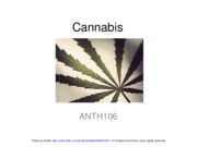 ANTH106-week4-lecture1-Cannabis-2010