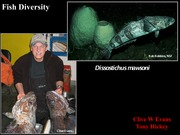 19. Fish diversity powerpoint