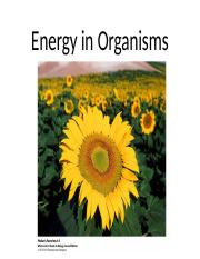 Chapter 4 Energy in Organisms.pptx