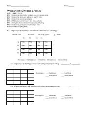 Punnett Square Worksheet 2 -- Two-factor cross worksheet ...