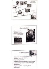 cat eveloution lecture material