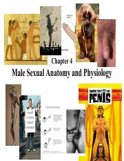 4 Ch 4 Male Sexual Anatomy and Physiology.pdf