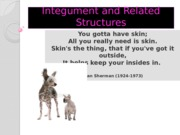 3070 integument and related structures lecture 4.ppt