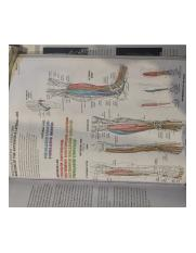 Helpful Anatomy  Coloring Book Diagram 2