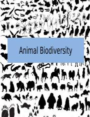 BIO Activity3 Animal Biodiversity.pptx