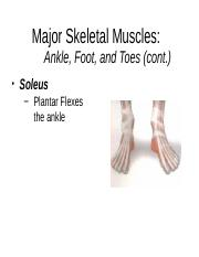 Major_Skeletal_Muscles_Actions (1).ppt