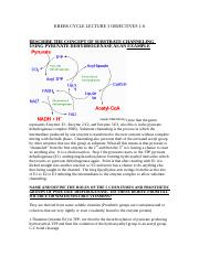 KREBS CYCLE LECTURE 3 OBJECTIVES 1-6