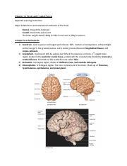 Chapter 14- Brain and Cranial Nerves