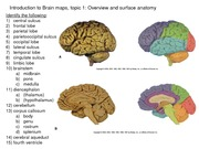 Reader - Brain Maps unlabeled