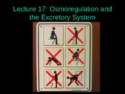Lecture+17+-+Excretory+system+POSTED (1)