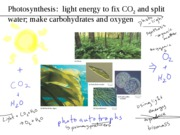 B1510_module3_7_photosynthesis