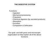 Digestive System I The Digestive System Functions Ingestion Mechanical Processing Propulsion Chemical Digestion By Secreted Products Absorption Course Hero