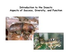 Lecture 3 - Intro to insects - success, diversity and function.pdf