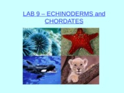 LAB 9 - Animal Diversity II - Echinoderms and Chordates