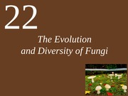 Chapter 22 The evolution and diversity of fungi