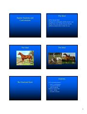 Equine Anatomy-Part I-1.pdf