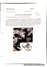 BIOL 1402 Lab 6 Animal Diversity And Adaptation