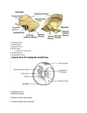 Review Sheet Anatomy