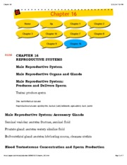 Chapter 16 Reproductive Systems