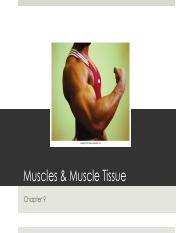 ch. 7 Muscles.pdf