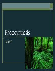 Photosynthesis Lab 7(4).ppt