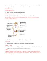 Ch. 16 Endocrine Glands Lab 1