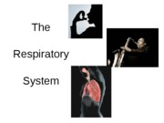 Lab 8 - The Respiratory System