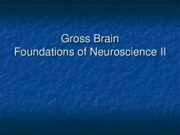 2011_Gross_Brain_for_Foundations_II