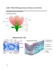 BISC 101 LAB 10 NOTES  pdf - LAB 10-Animal Biology(integumentary