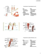 biceps and brachii notes