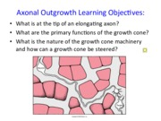 9. Axonal Outgrowth 2014.pdf