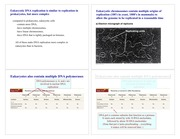 PostLecture_ReplicationEuks_Web4