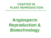 Ch 38 Plant Reproduction