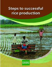 12-Steps-Required-for-Successful-Rice-Production