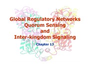 Day_6_-_Global_Networks_and_Quorum_Sensi