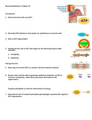 6-anim_muscle_metabolism.doc
