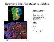 Tranduction Regulation of Transcription