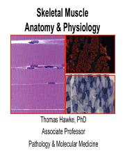 Muscle+AP+F15-Hawke+lecture.pdf