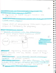 Neurons Notes