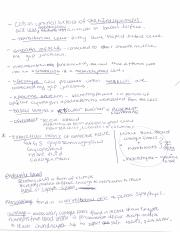 Review Epithelial and Integumentary II