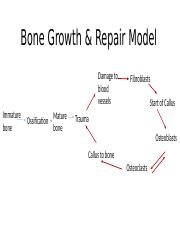Bone repair and tissue respone to trauma by R Wagner (1)