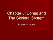 Chapter 6 Bones and The Skeletal System