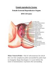 female reproductive system-1