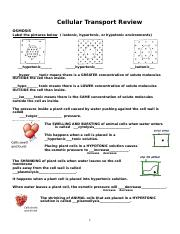 34 Cellular Transport Review Worksheet Answer Key ...