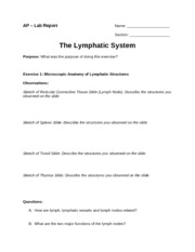 AP-2_The_Lymphatic_System_RPT
