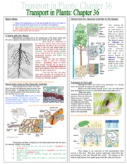 Chapter_36_Transport_in_Plants