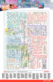 metabolic_pathways_poster