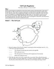 Printables Cell Cycle Regulation Worksheet cell cycle regulation worksheet bloggakuten