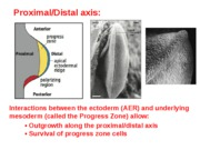 proximal axis